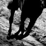 〔有馬記念 2015〕ジャパンカップ出走組を検証