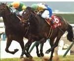 〔京都記念 2016〕血統予想最終見解・・・混戦を断つのはこの馬