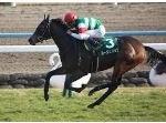 【中山牝馬ステークス 2016】血統予想展望・・・今年こそルージュバック女王の座へ