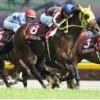 【青葉賞 2016】血統から見る東京優駿(ダービー)での刺客はこの馬!!・・・最終予想発表