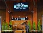 【セレクトセール 2016】1歳馬総括:血統診断オーサムフェザー2015 果たして2億6千万分稼げるのか?