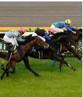 【サウジアラビアロイヤルカップ 2016】血統予想・来春への期待馬はこの馬!!