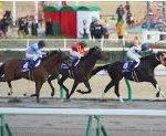 【チャンピオンズカップ 2016】血統予想、出走予定馬と予想オッズ検証・・・ジャパンカップ回顧