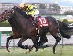 【阪神カップ 2016】血統予想・有馬記念前に資金稼ぎ、最終予想買い目発表