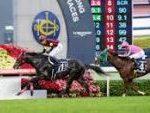 【香港カップ 2016】血統予想・モーリス・エイシンヒカリ圧倒か?予想オッズは日本馬優位