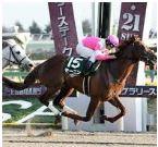 【根岸ステークス 2017】血統予想と過去データ分析/出走予定馬の予想オッズで狙い目はこの馬!
