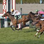 [阪急杯2017]出走予定馬予想オッズとデータ傾向・血統展望。データより気になるのは鞍上と馬主の組み合わせ!?