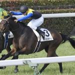 [大阪杯2017]データ予想〜出走予定馬の中で軸馬に最適な馬はこの馬!!!