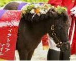 【ヴィクトリアマイル 2017】血統展望・出走予定馬/予想オッズ、断然人気ミッキークイーンに死角は?