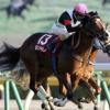 [NHKマイルカップ2017]出走予定馬からデータ予想!人気は信用できないオイシイレースになるはず!