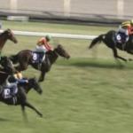 [安田記念 2017]出走予定馬とデータ予想!穴馬のツボ追加。万馬券はいただいた!