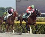 【ユニコーンステークス 2017】血統展望・出走予定馬/予想オッズ、大混戦砂のダービー3歳チャンピオンは?