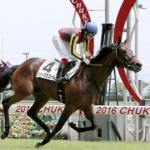 [函館スプリントステークス2017]データ予想!出走予定馬でオイシイ馬はこれ!