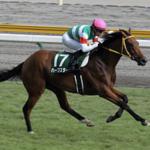 [新潟2歳ステークス2017]データ予想!出走予定馬の中で今年馬券に絡む牝馬はこの馬だ!!