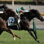 [神戸新聞杯 2017]出走予定馬、予想オッズとデータ予想!穴は買わないほうがいい!狙い目はこれ!