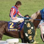 [菊花賞2017]予想オッズ/出走予定馬とデータ予想!馬券圏内率100%データと0%データをご紹介!