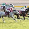 [府中牝馬ステークス2017]予想オッズ/出走予定馬とデータ予想!勝率0%の衝撃データ!!