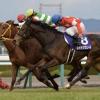 [阪神ジュベナイルフィリーズ2017]データ予想!出走予定馬と予想オッズ!買いたいのは複勝率42.9%の種牡馬から!