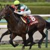 [ホープフルステークス2017予想]出走予定馬/予想オッズとデータ予想!初代王者に輝くのは日本人騎手?外国人騎手?