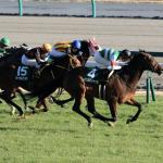 [愛知杯2018]データ予想!出走予定馬の爆穴複勝率3割超え!万馬券意外と簡単にゲットできるかも〜!