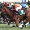 [オーシャンステークス2018]出走予定馬、予想オッズとデータ予想!高松宮記念に向けた重要な1戦!