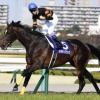 [大阪杯2018]当たるサイン馬券予想!プレゼンターから考察。あの馬があの枠に入れば完璧!
