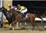 【ジャパンダートダービー2018】血統予想・砂のダービー馬はこの馬!!最終予想発表