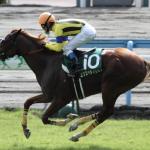[小倉記念2018]予想オッズ・出走予定馬、データ予想!内すぎず、外すぎず、軽すぎず、重すぎず・・バランスが大事!?