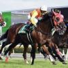 [新潟記念2018]予想オッズ・出走予定馬とデータ予想!万馬券は頂いた!枠順発表が楽しみです!