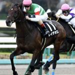 [神戸新聞杯2018]予想オッズ・出走予定馬とデータ予想!3連単を買うしかない!3週連続的中へ!!