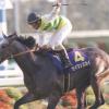 [菊花賞2018]予想オッズ、出走予定馬とデータ予想!関東馬だけどジェネラーレウーノ気になる・・・