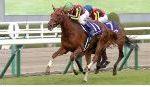 【阪神ジュベナイルフィリーズ2018】血統・調教診断、それぞれから狙いたい馬はこの馬!!