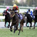 [阪神ジュベナイルフィリーズ2018]予想オッズ・出走予定馬とデータ予想!上位人気の複勝率の高さに注目!