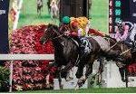 【香港カップ2018】血統予想・日本馬今年最初の海外G1なるか?最終予想の発表!!