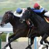 [日経新春杯2019]予想オッズと出走予定馬、データ予想!狙ってみたいのは、4歳、牝馬、49キロ!?