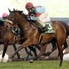 [シンザン記念2019]予想オッズ、出走予定馬とデータ予想!今年も牝馬が勝つのか?
