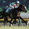 [東京新聞杯2019]予想オッズ・出走予定馬とデータ予想!複勝率42.9%のタワーオブロンドンは枠次第!?