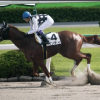 [東海ステークス2019]データ予想!出走予定馬と予想オッズ!石清水Sの予想もおまけ(笑)