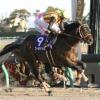 [フェブラリーステークス2019]予想オッズ・出走予定馬とデータ予想!藤田菜七子騎手騎乗のコパノキッキングは勝てるのか?