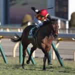 [クイーンカップ2019]予想オッズ・出走予定馬とデータ予想!阪神JF組が優勢!