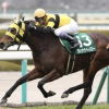 [阪急杯2019予想]データ予想!出走予定馬から優位性のある美味しいオッズの馬を見つけましょう!