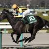 [チューリップ賞2019]データ予想!オッズと出走予定馬の紹介と、イチオシの馬でショウブ!