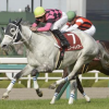 [阪神牝馬ステークス2019]予想オッズ・出走予定馬とデータ予想!