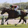 [函館スプリントステークス2019]予想オッズ・出走予定馬とデータ予想!狙いは牝馬!