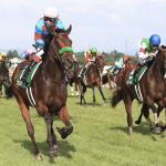 [新潟記念2019]予想オッズ・出走予定馬とデータ予想!牝馬は消し!今年も大荒れの予感!ユーキャンスマイルはこの距離で良いのか?