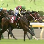 [毎日王冠2019]予想オッズ・出走予定馬とデータ予想!ダノンキングリー飛躍の秋へ