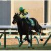 【京成杯 2020】血統展望・出走馬確定/予想オッズ、春のクラシック戦線にのる馬は?