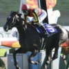 [京都記念2020]データ予想!最終版!牡馬を重視し、馬場を重視した結果。ドバイを見据えた、牝馬2頭は軽視したい!