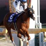 [フェブラリーステークス2020]データ予想!出走予定馬と予想オッズから導きます!