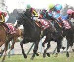 【京都記念 2020】血統展望/出走予定馬・予想オッズ、人気4歳牝馬の実力は??